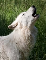 Susan.Werewolf