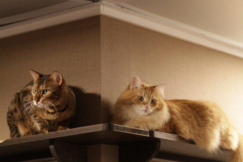 cat-cctv.jpg