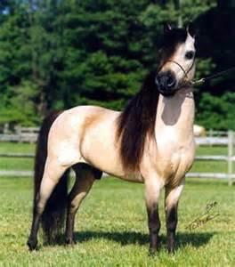 Koń jest połową mnie♥