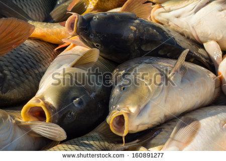 stock-photo-carp-fishing-160891277.jpg