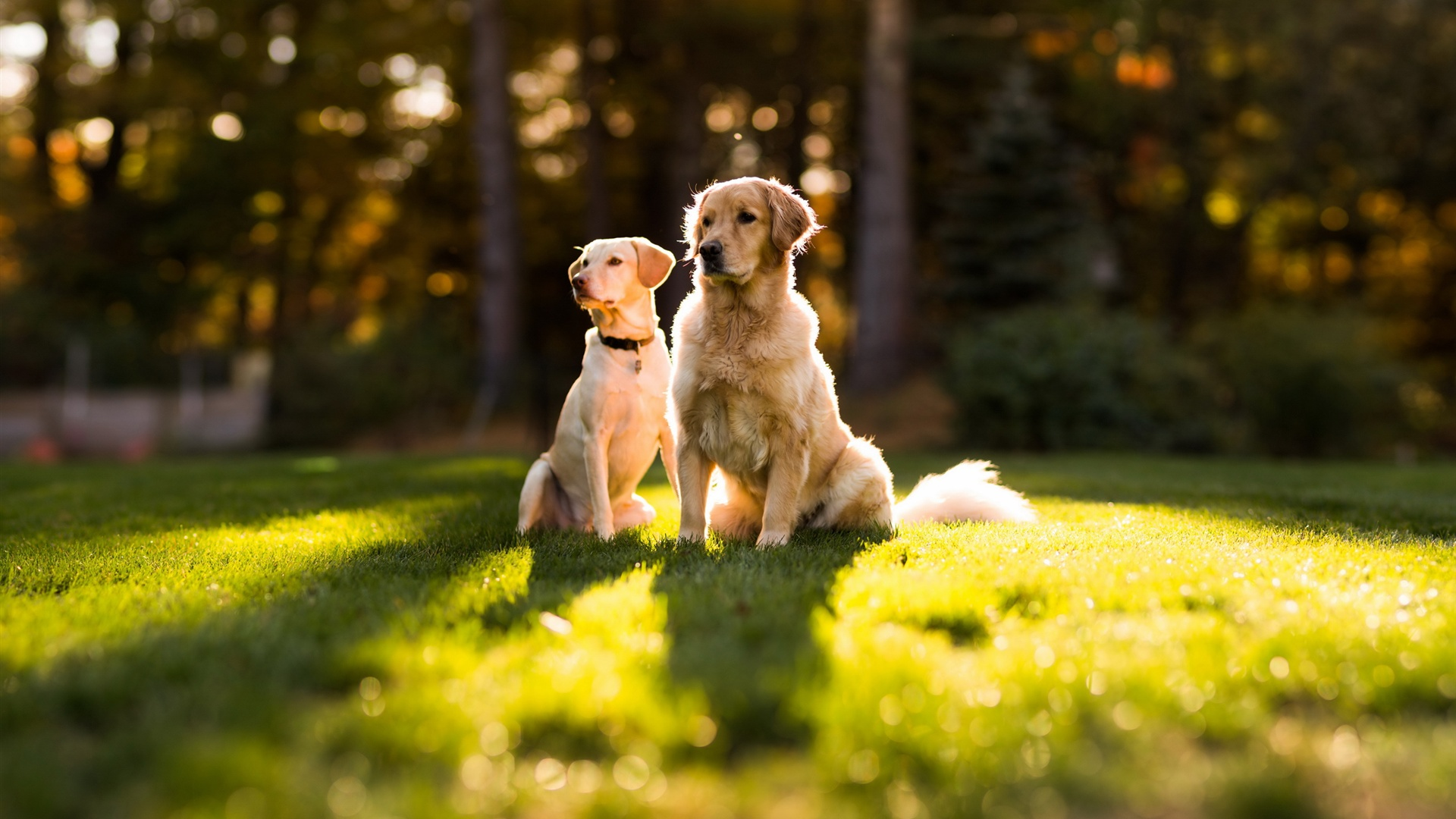 Two-dogs-in-the-sun-on-the-grass_1920x1080.jpg