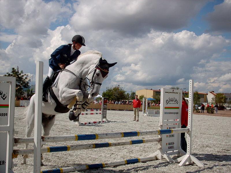 800px-Showjumping_white_horse.jpg
