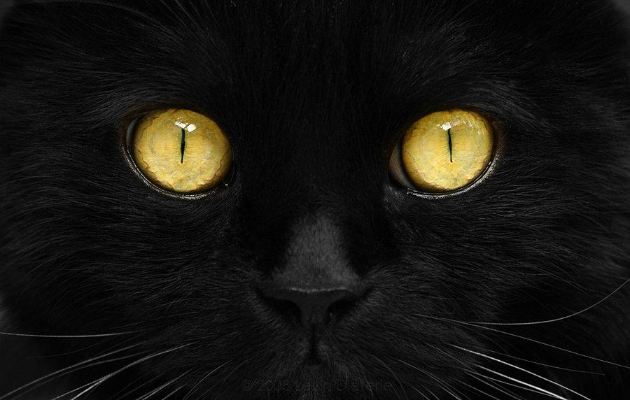 Cats_by_photon_hunter.jpg