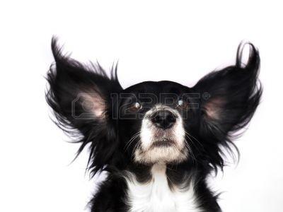 563115-jest-to-pies-czarno-na-bialym-tle.jpg