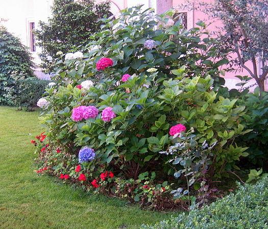 hortensje-kwiaty-jak-bukiety_2783_6.JPG