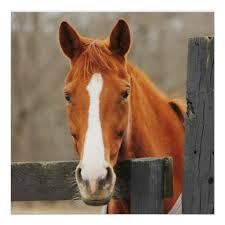 Stające Dęba Konie ♥