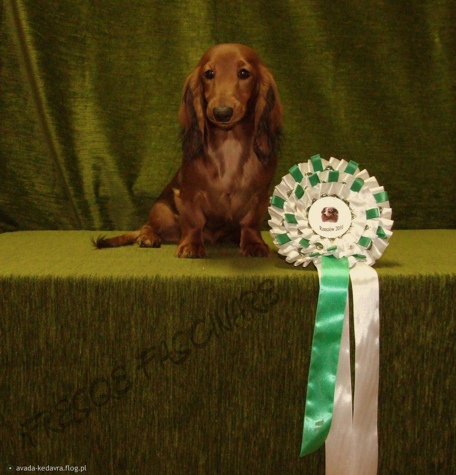 919287_miedzynarodowa-wystawa-psow-rasowych-w-rzeszowie-2010.jpg