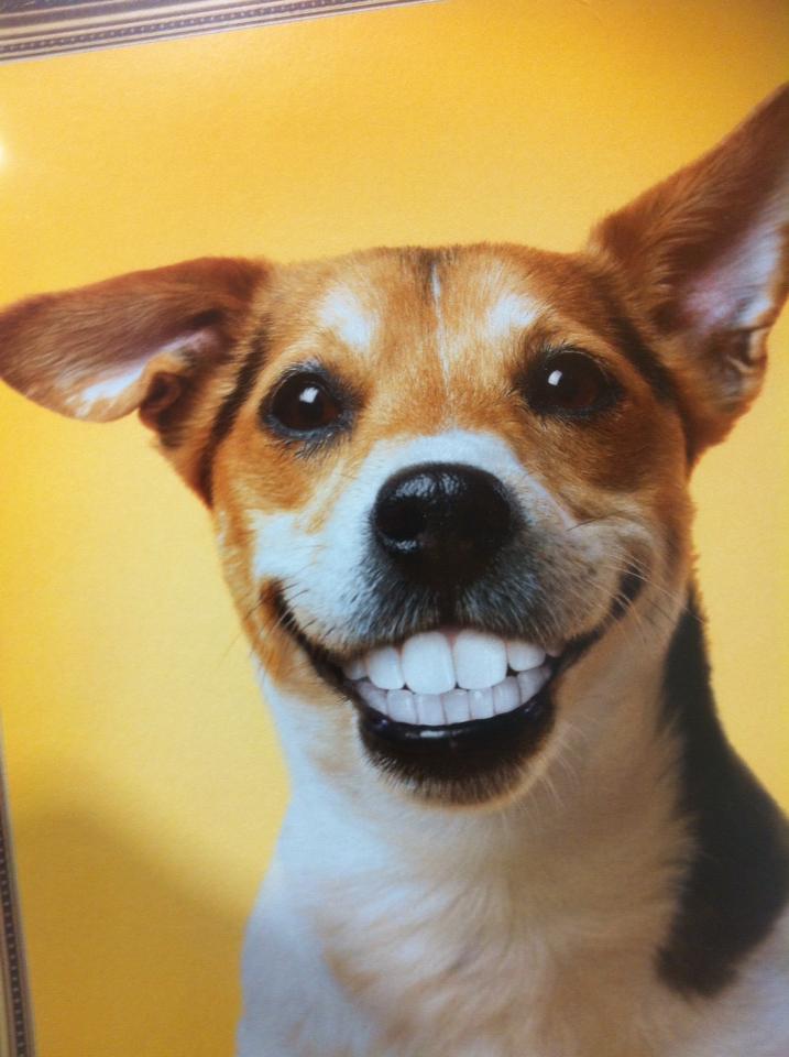 happy_dog____by_topas2012-d56wkvz.jpg