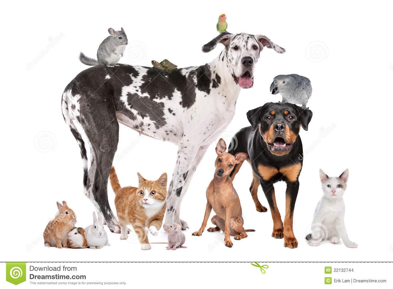 animaux-familiers-devant-un-fond-blanc-22132744.jpg