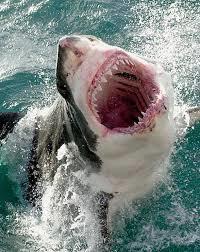 Rekiny moją pasją