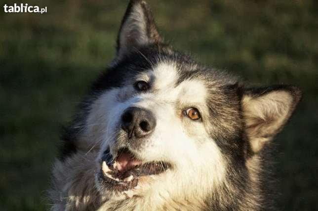 Psia Łapa