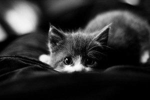 Dla osób które mają piękne koty
