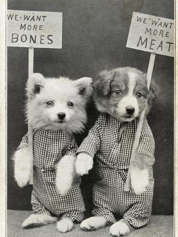 we-want-more-bones-we-want-more-meat_i-G-61-6168-SWOG100Z.jpg