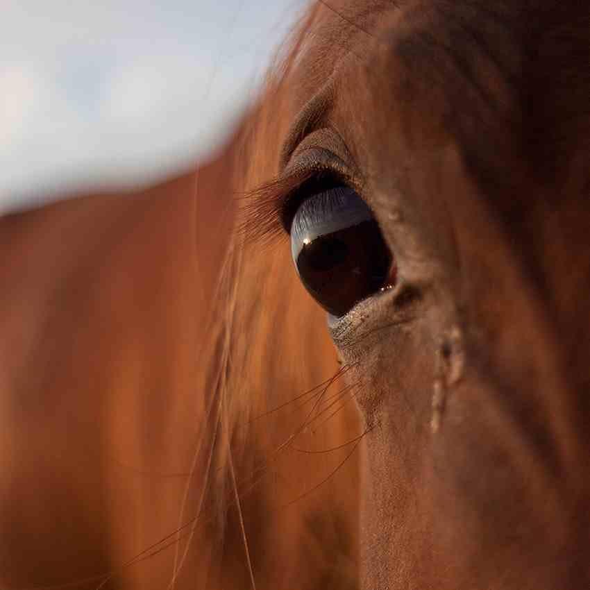 Zalinacze koni-metody naturalne