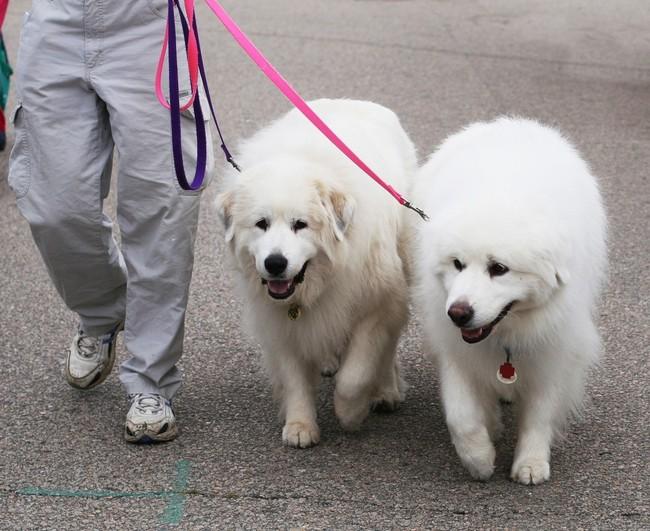nauka-chodzenia-psow-na-luznej-smyczy724.jpg