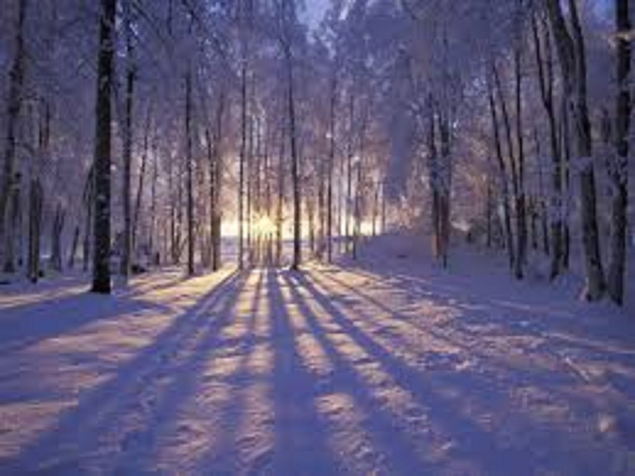 We ♥ winter!