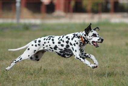 pies-skacze-na-obcych.jpg