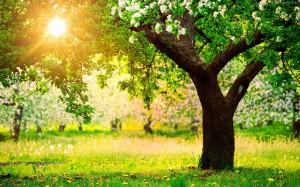 167357_wiosna_laka_kwitnace_drzewa_przebijajace_swiatlo-300x187.jpg