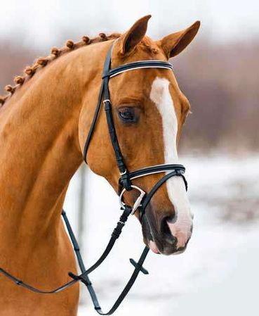 b3ed79cce1528 Czy to ogłowie pasuje do siwego konia . ? - Zapytaj.onet.pl -