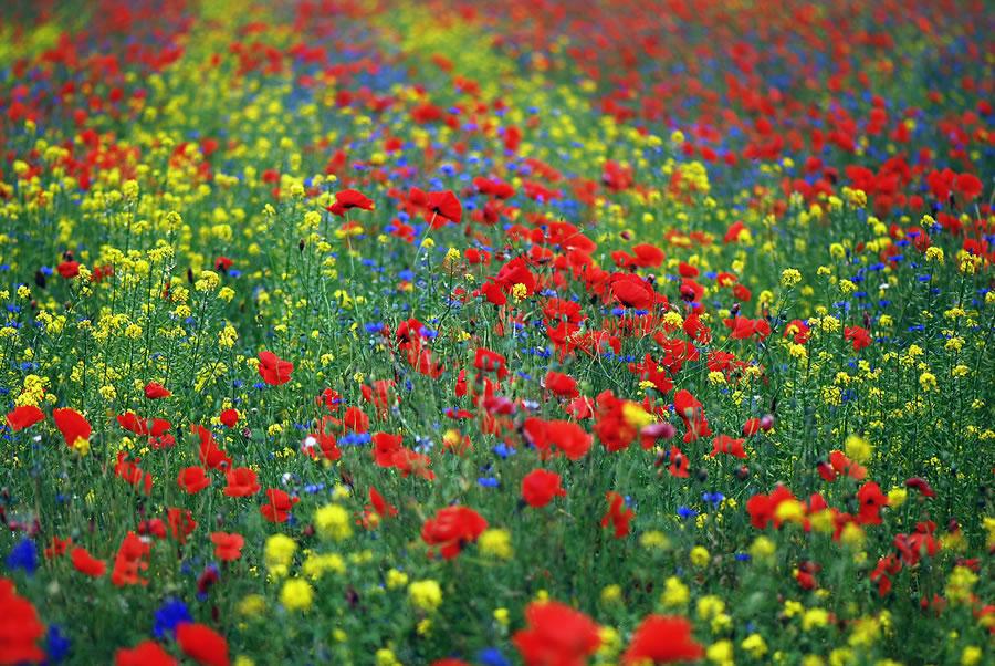 zdjecie2-meadow-chojnowski-park-krajobrazowy.jpg