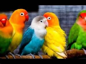 My kochamy zwierzęta!♥♥♥