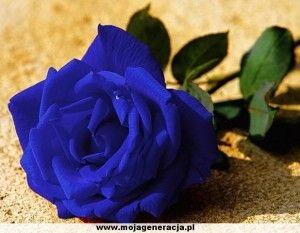 4e68db729b4418 Co oznaczają niebieskie róże? - Zapytaj.onet.pl -