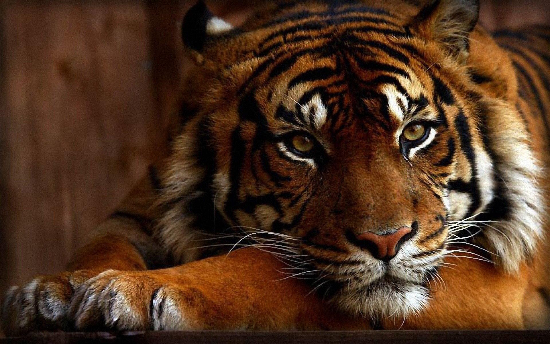 STOP! zabijaniu dzikich zwierząt dla pieniędzy!