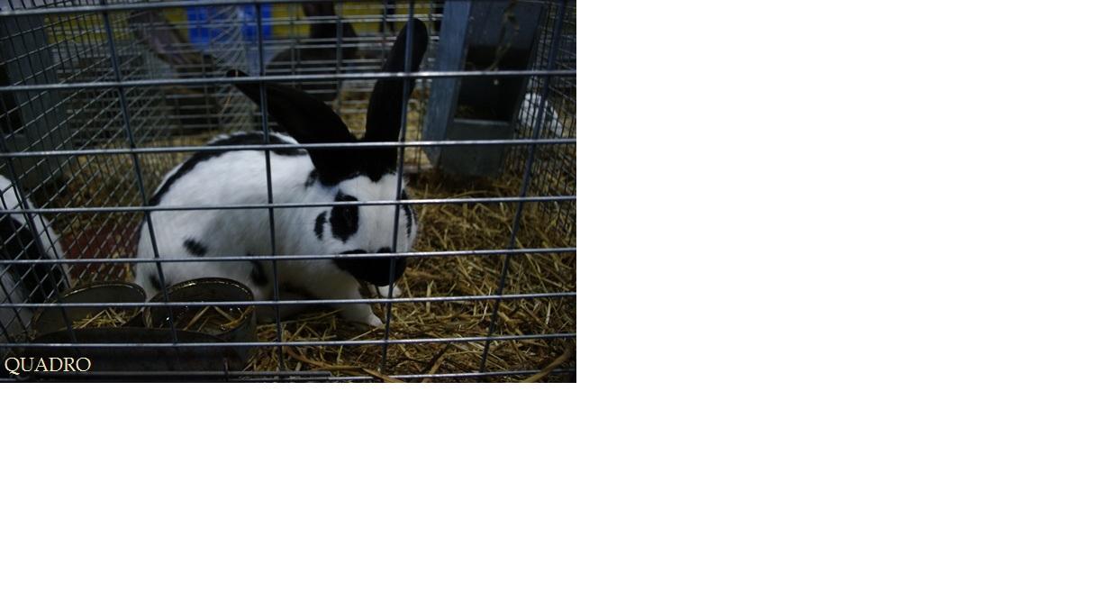 My mamy królika lub chcemy mieć lub będziemy mieć