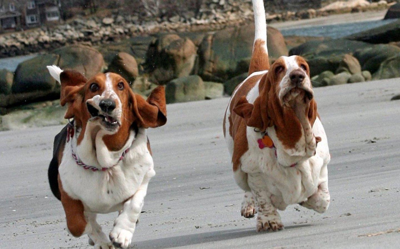 basset-hound-lovely-face_92937-1440x900.jpg