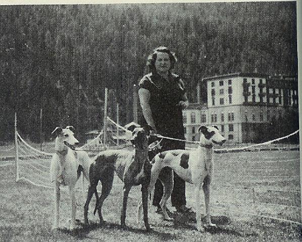 Greyhound_Donatella-big.jpg
