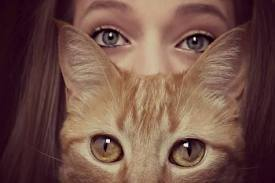 I ❤ Cats & Dogs