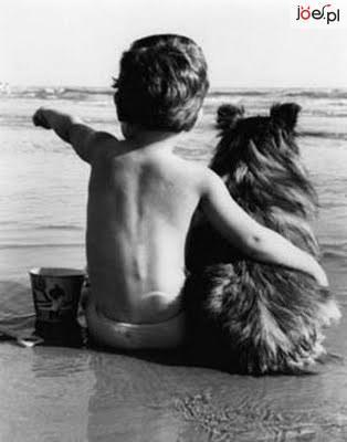 pies-najlepszy-przyjaciel-czlowieka.gif