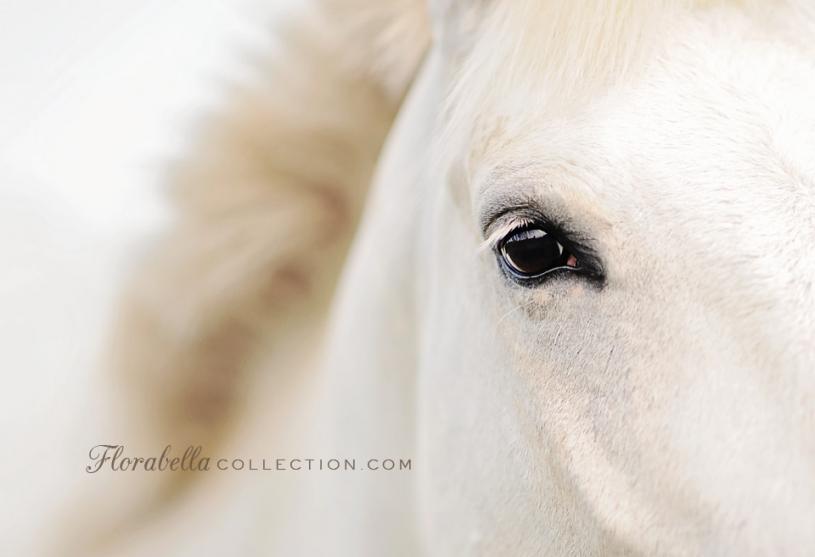 Nie ma większej tajemnicy niż magiczna więź łącząca jeźdźca i konia
