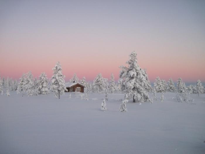5. Las borealny, Norwegia