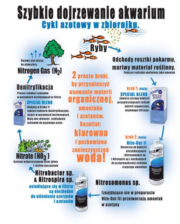 bakterie2.jpg