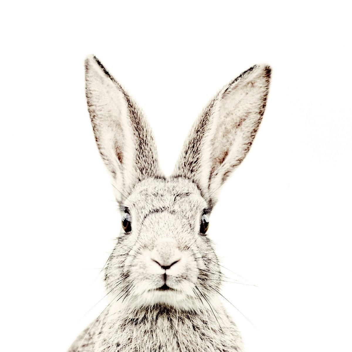 Klub ludzi, którzy mają króliki