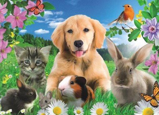 Mamy zwierzęta.  :)