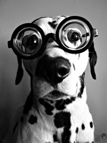 okularry.jpg