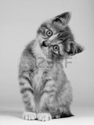 7346064-ritratto-di-bianco-e-nero-di-cute-kitten-interno.jpg