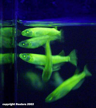 tk-1_fish.jpg