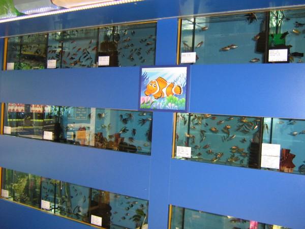 rybki-akwariowe-gruszka-witold-sklep-zoologiczny.jpg