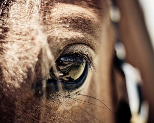 Żadna z godzin spędzonych na koniu, nie jest w życiu godziną straconą.