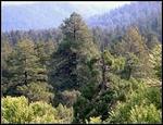 Strefa północnych lasów iglastych(tajga)