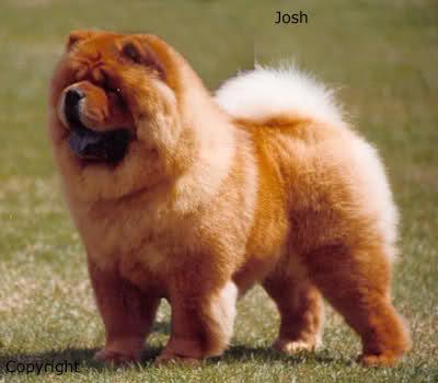 Góra Podoba Ci się ten pies ? - Zapytaj.onet.pl - RT73