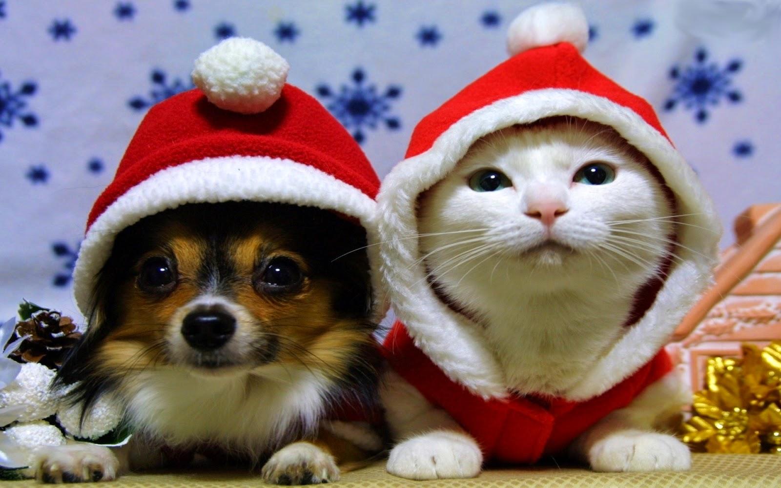 kot-czerwone-czapki-pies.jpeg