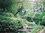 Strefa lasów równikowych(deszczowych)