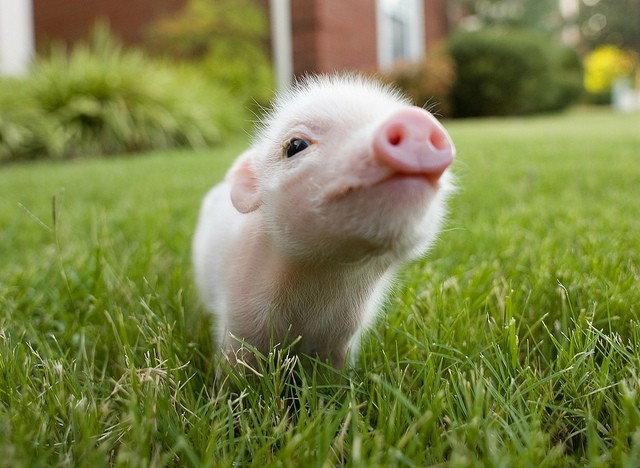 Kocham zwierzęta, dlatego ich nie jem.