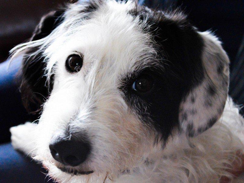 jessie-the-dog.jpg