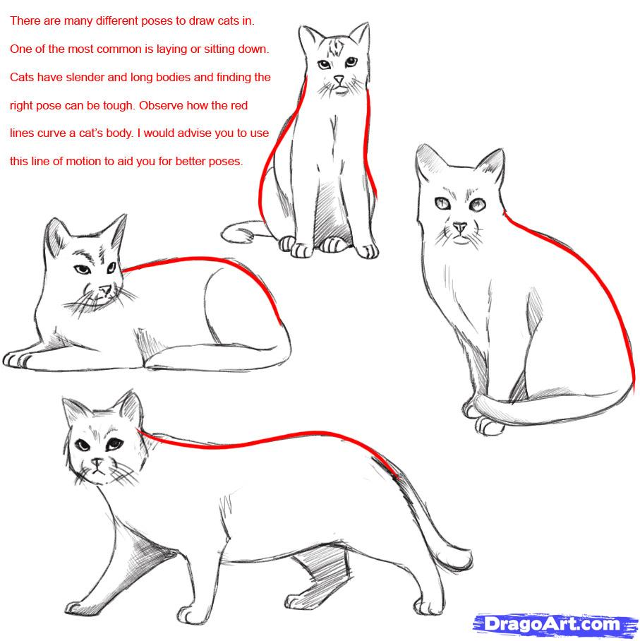 how-to-draw-a-realistic-cat-draw-real-cat-step-1_1_000000023895_5.jpg