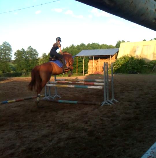 HorsesIsMyPassion